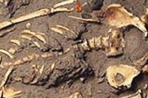 Τουρίστρια στην Πάρο βρήκε ανθρώπινα οστά